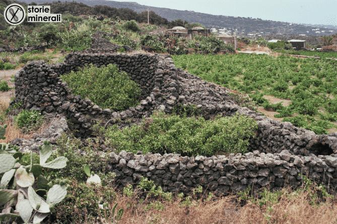 giardino pantesco - agrume - pantelleria - agricoltura