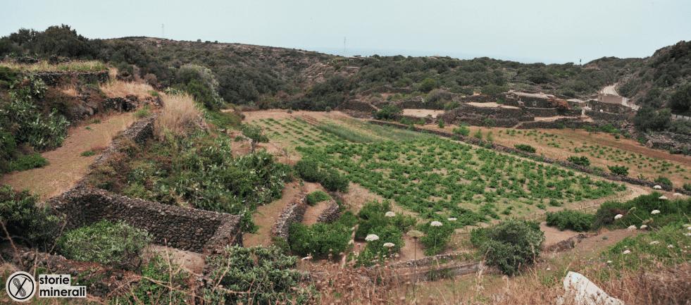 Pantelleria - Agricoltura - Paesaggio - Vite - Alberello - Cappero - Giardino - Pantesco