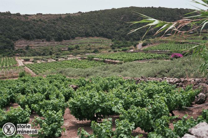 Vite - Alberello - Pantelleria - Agricoltura - Piana - Ghirlanda